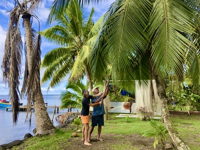 Tiaou teaches me to bring down the coconut from the trees